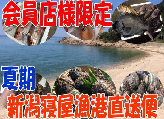 新潟寝屋漁港直送鮮魚通販
