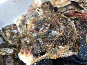 岩牡蠣殻開け