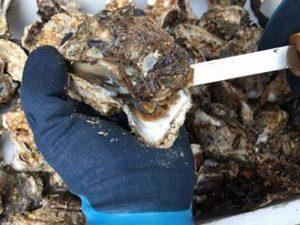 剥き岩牡蠣