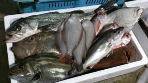 漁師直送セット