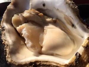 新潟山北笹川流れ岩牡蠣