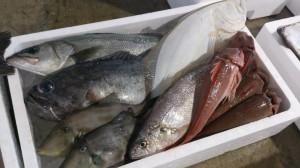 産地直売鮮魚