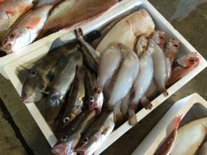 鮮魚仕入日本海