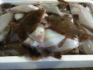 鮮魚山盛り販売