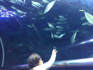 水族館魚子供