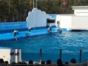 イルカショーマリンピア日本海