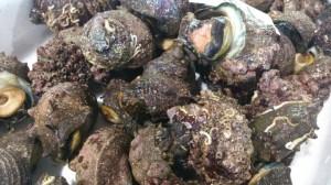 日本海産栄螺