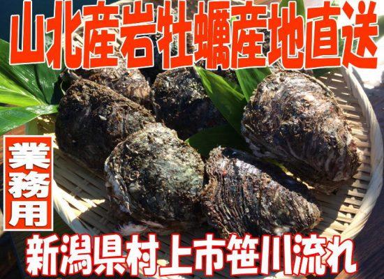 新潟笹川流れ岩かき販売