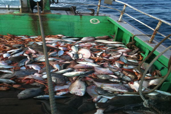 底引き漁業