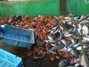 様々な種類の水揚げされたばかりの魚