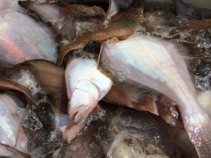 日本海魚通販