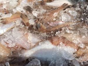 新潟海産物
