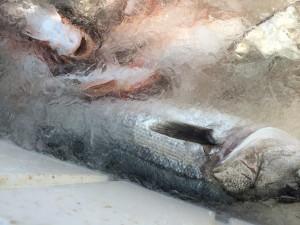 新潟県山北町魚