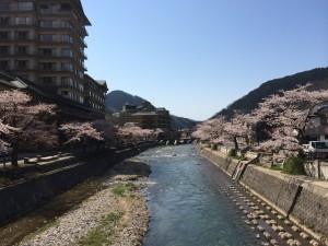 あつみ温泉桜