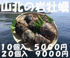 旅サラダ新潟村上笹川流れ山北岩牡蠣お取り寄せ