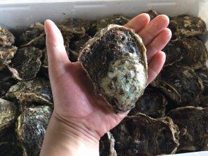 山北産岩牡蠣中サイズ