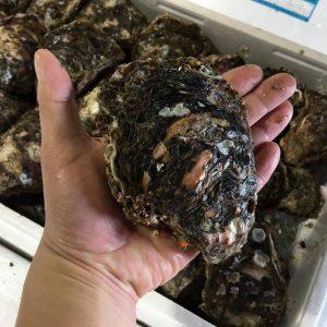 山北産岩牡蠣大サイズ