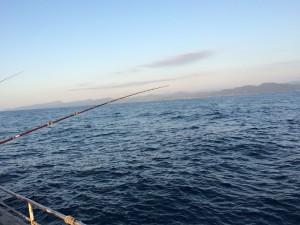 日本海一本釣り仕入