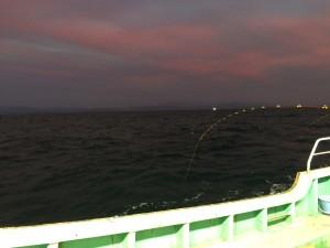 漁火釣り仕入れ