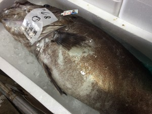 高級魚アラ