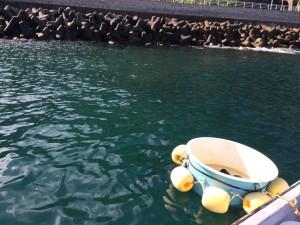旧山北町岩牡蠣漁