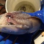殻を背負った蛸