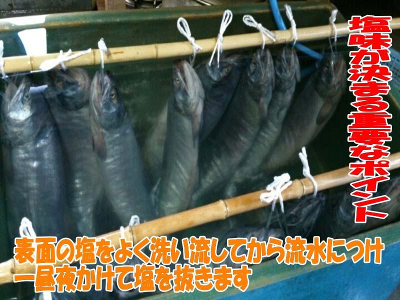 塩引き鮭製造工程で最も重要な塩抜き