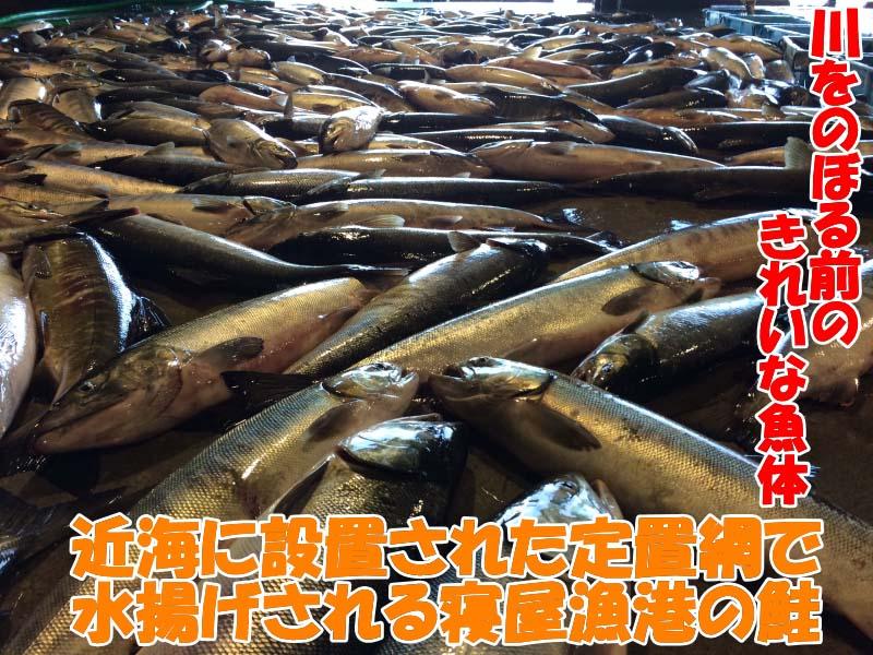川をのぼる前の高品質な秋鮭のみを使用