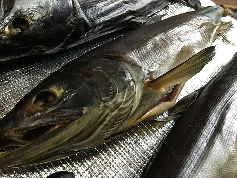 新潟県村上市名産塩引き鮭