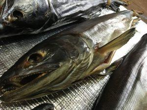 越後塩引き鮭作り方