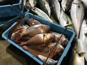 冬の真鯛釣り