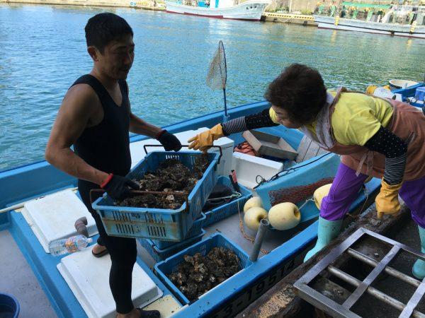 山北産岩牡蠣を水揚げする漁師直送昭和丸