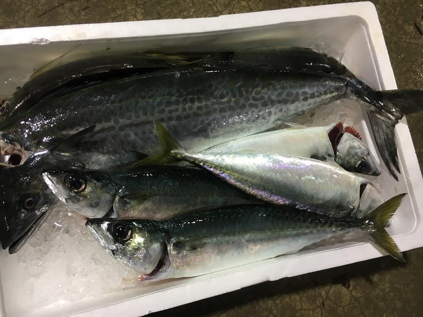 神経締め鮮魚セット