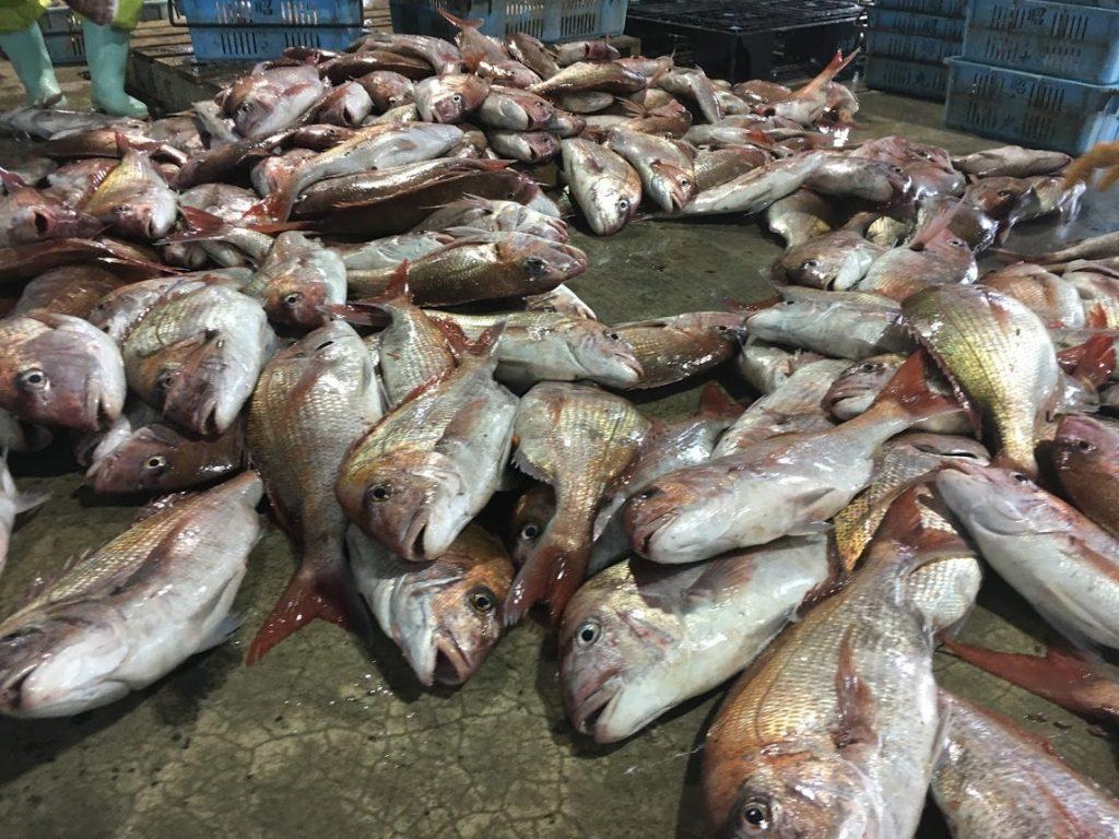漁港(漁協)で魚の選別