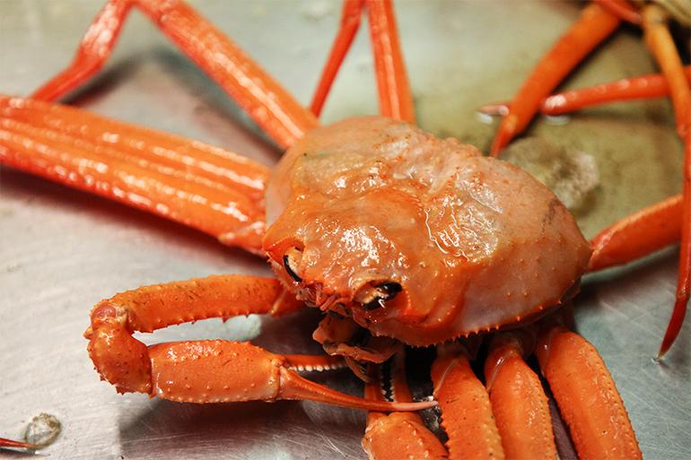 食べ放題として利用される事が多い蟹の紅ズワイガニ
