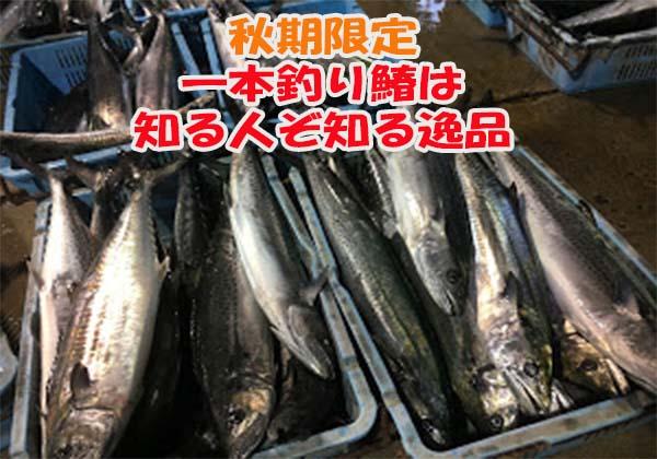 新潟日本海の秋サワラの通販紹介