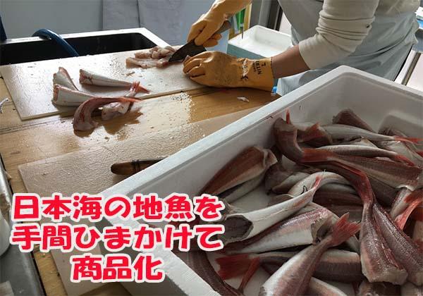 未利用魚を商品化して六次産業化を目指す漁師