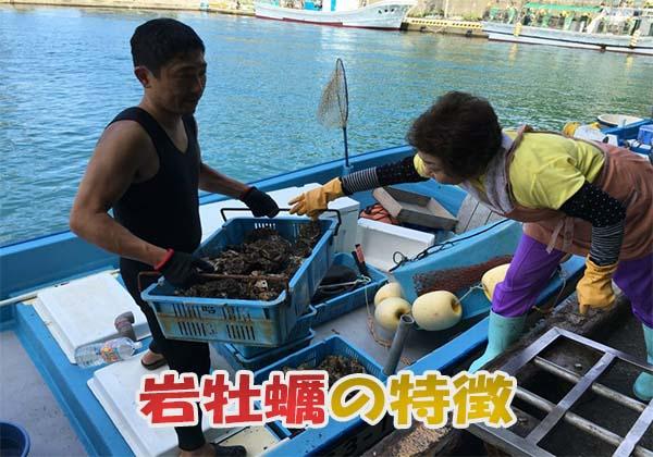 岩牡蠣(イワガキ)の旬と特徴
