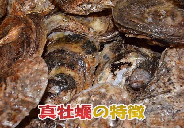 真牡蠣の旬と特徴