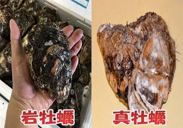 岩牡蠣と真牡蠣の見た目の違いを比較