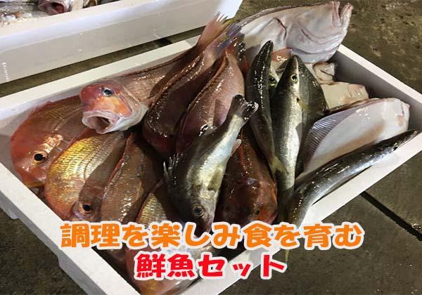 料理を楽しみ食を育む鮮魚セット通販方法