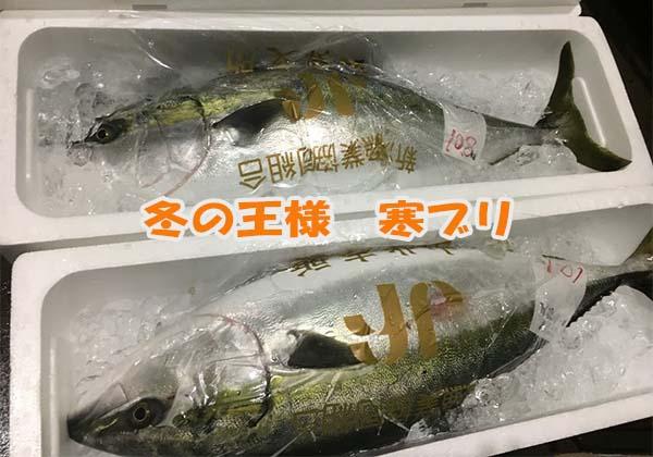 日本海の極上一本釣り寒ブリ