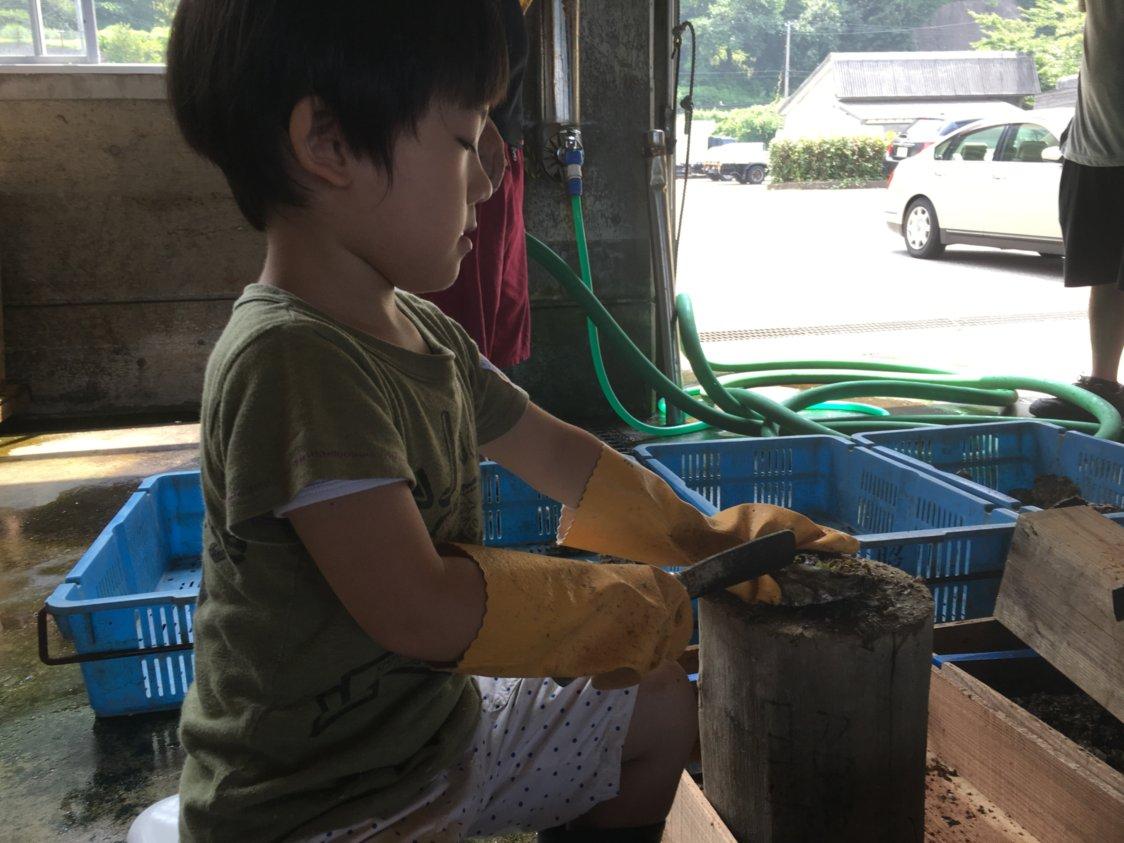 子供が漁師の父親の漁業の手伝い