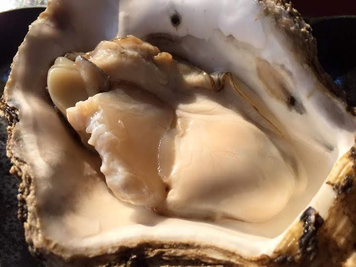 山北産ブランド岩牡蠣