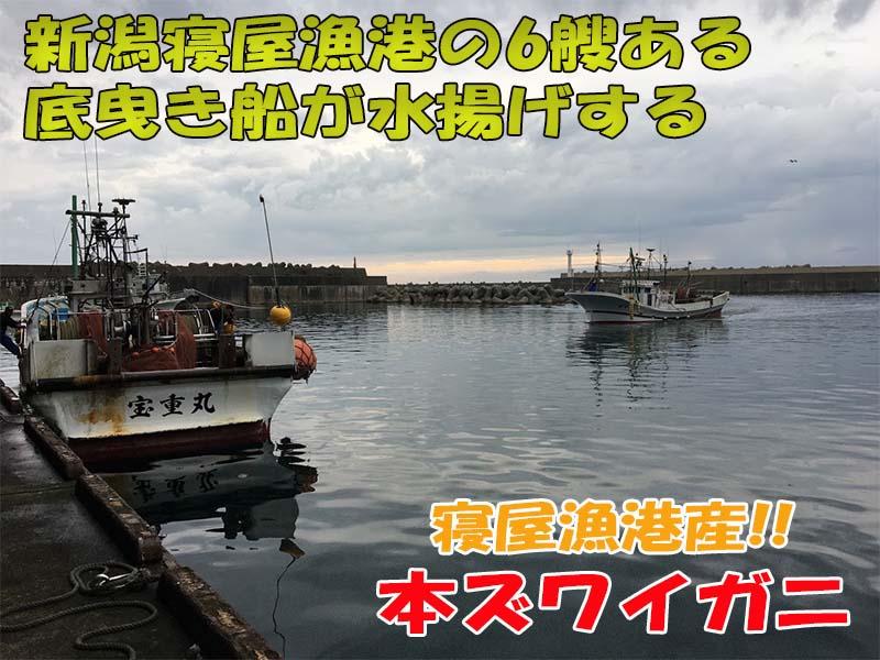 新潟漁協山北支所でズワイガニを水揚げする底曳き漁船