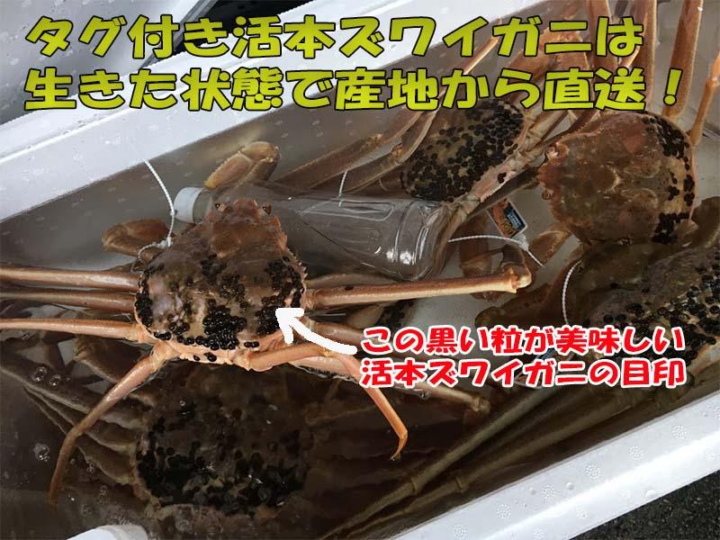 美味しいタグ付き新潟寝屋漁港産活本ズワイガニの目印
