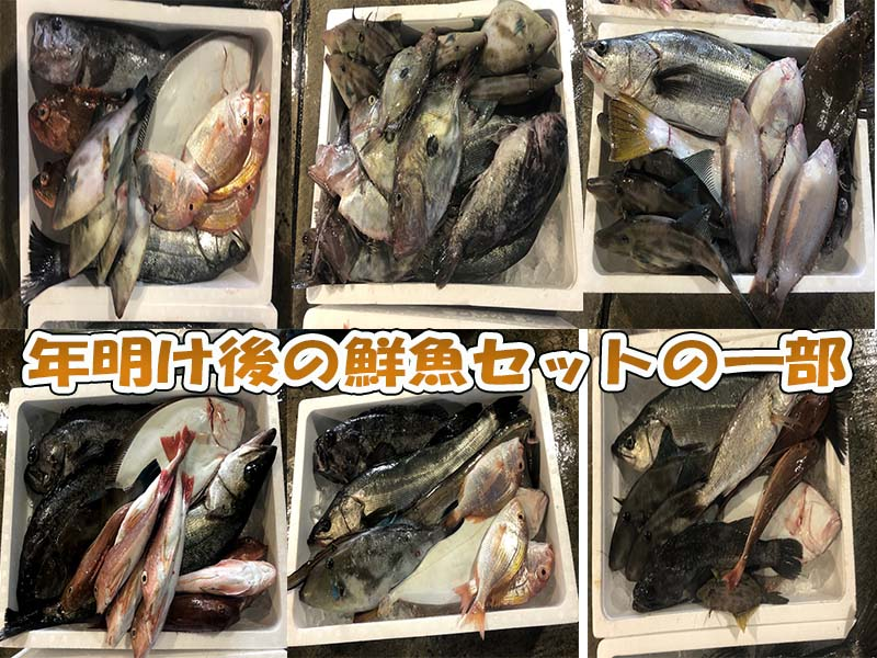 漁師直送鮮魚セットの一例