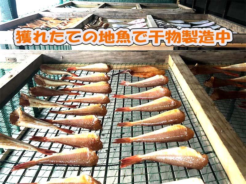 日本海新潟の地魚で生産者(漁師)が製造直販する干物セット