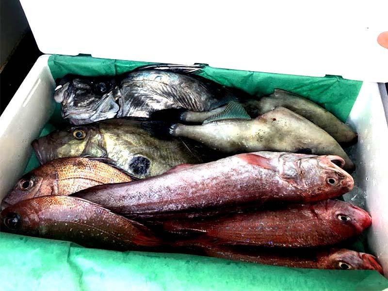 カガミダイ、マトウダイ、マダイ、チダイ、ヒゲダラ、ヨロイイタチウオ、ウマヅラハギが入った鮮魚セット