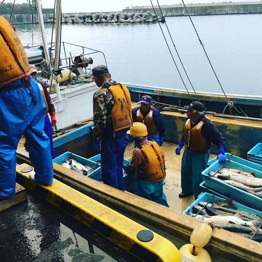 村上市寝屋漁港の秋鮭水揚げの様子